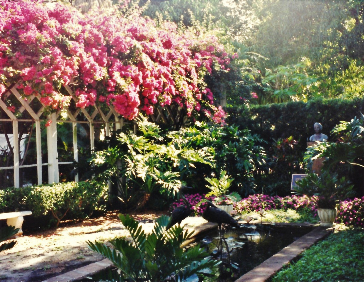 Bougainvilleas cascading over a portion of the Thomas Edison home in Florida.