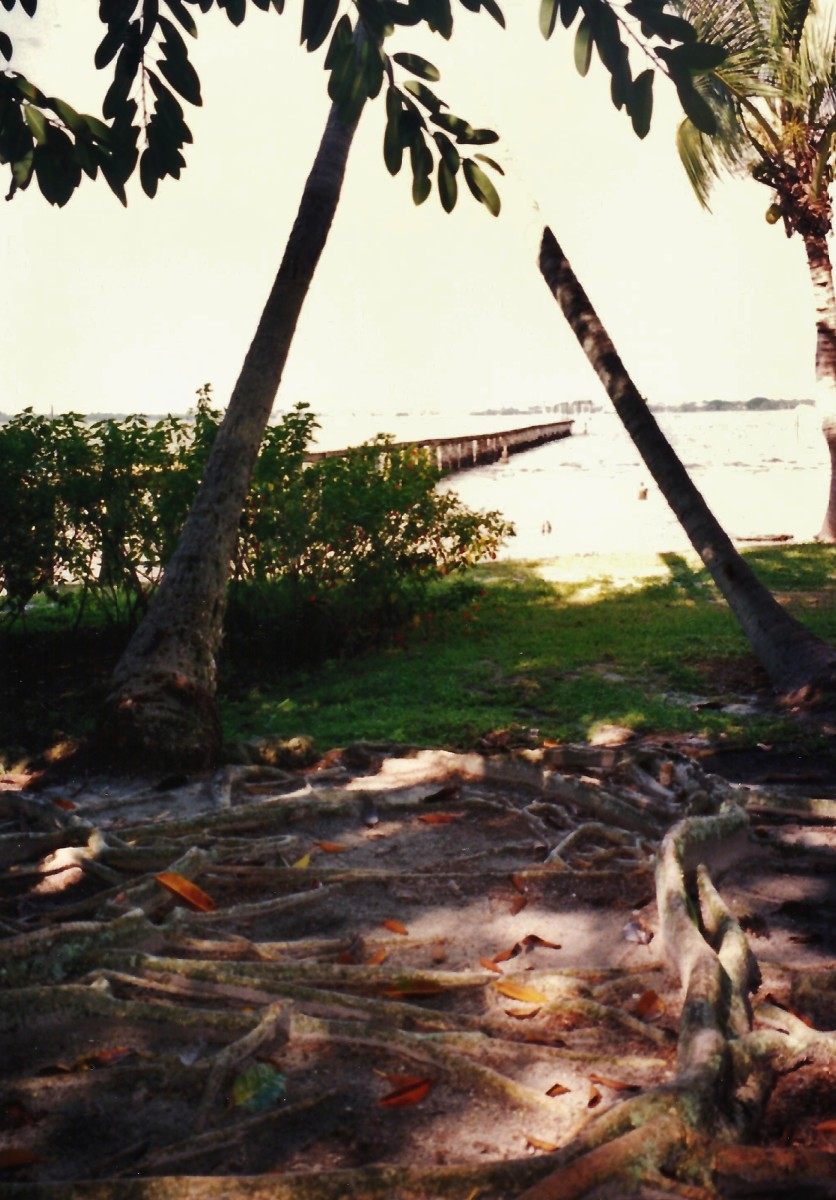View of the Caloosahatchee River near the Ford home