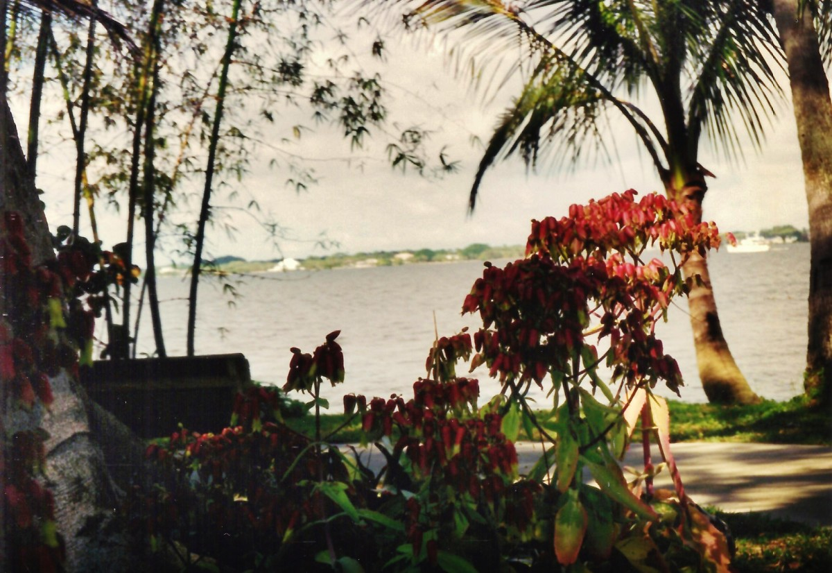 View of the Caloosahatchee River
