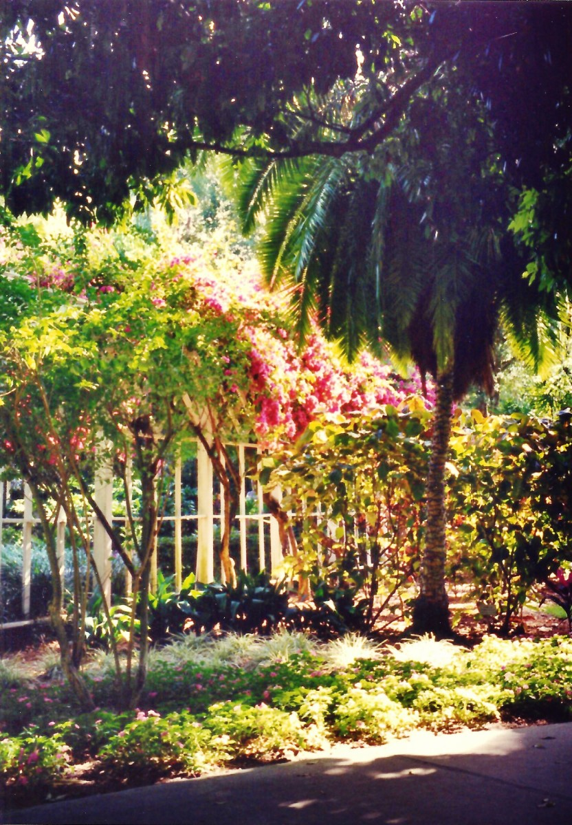 Lush tropical foliage around the Edison home