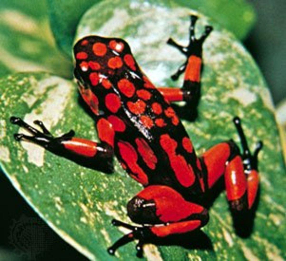 top-10-deadliest-venomous-animals