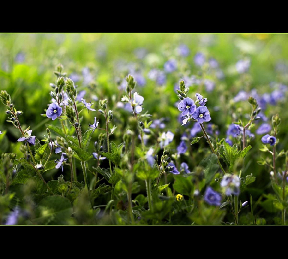 Flowers with Canon 50mm f/1.8 II