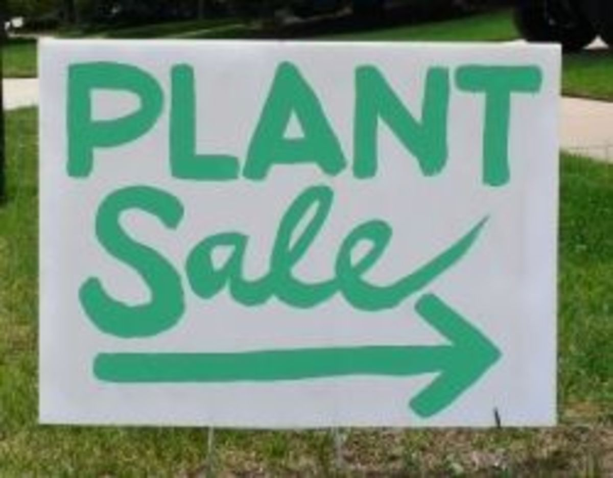 Where to Sell Your Plants Online