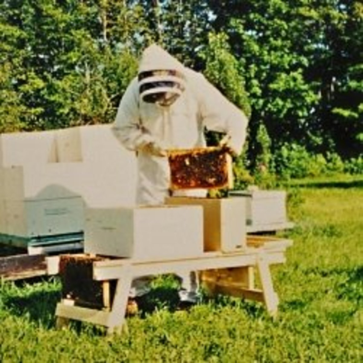 Build a Beekeeper's Work Bench