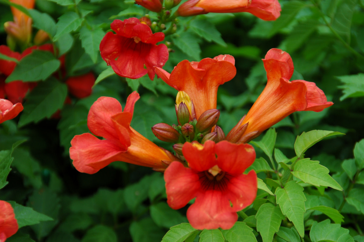 all-those-tubular-shaped-flowers