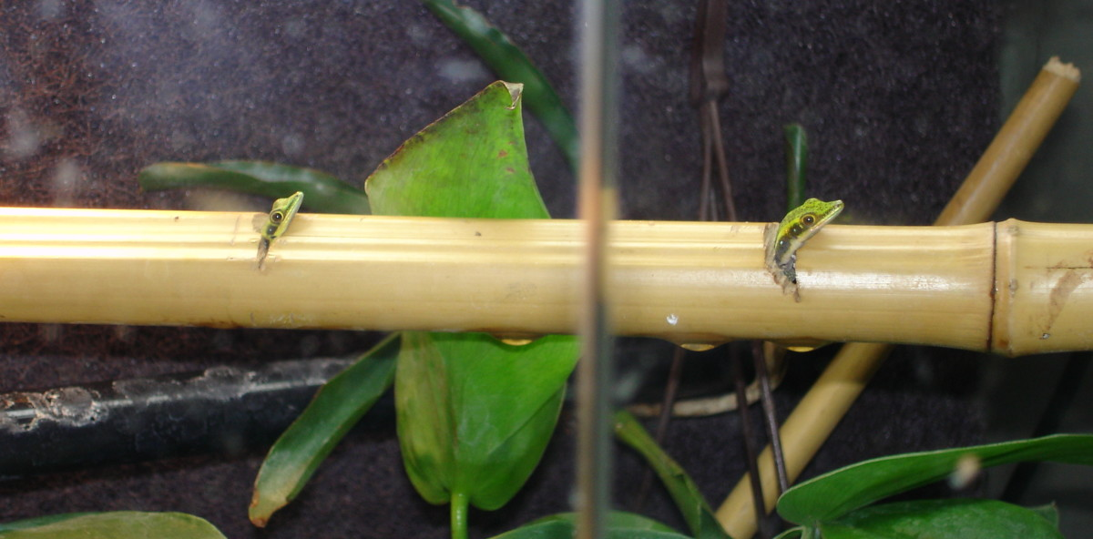 Worf and K'ehleyr enjoy living in bamboo