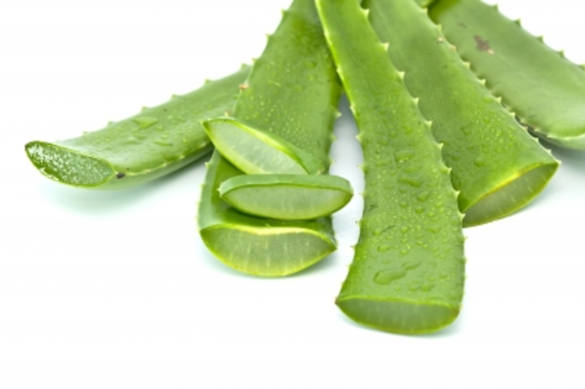 cut aloe leaf showing gel inside