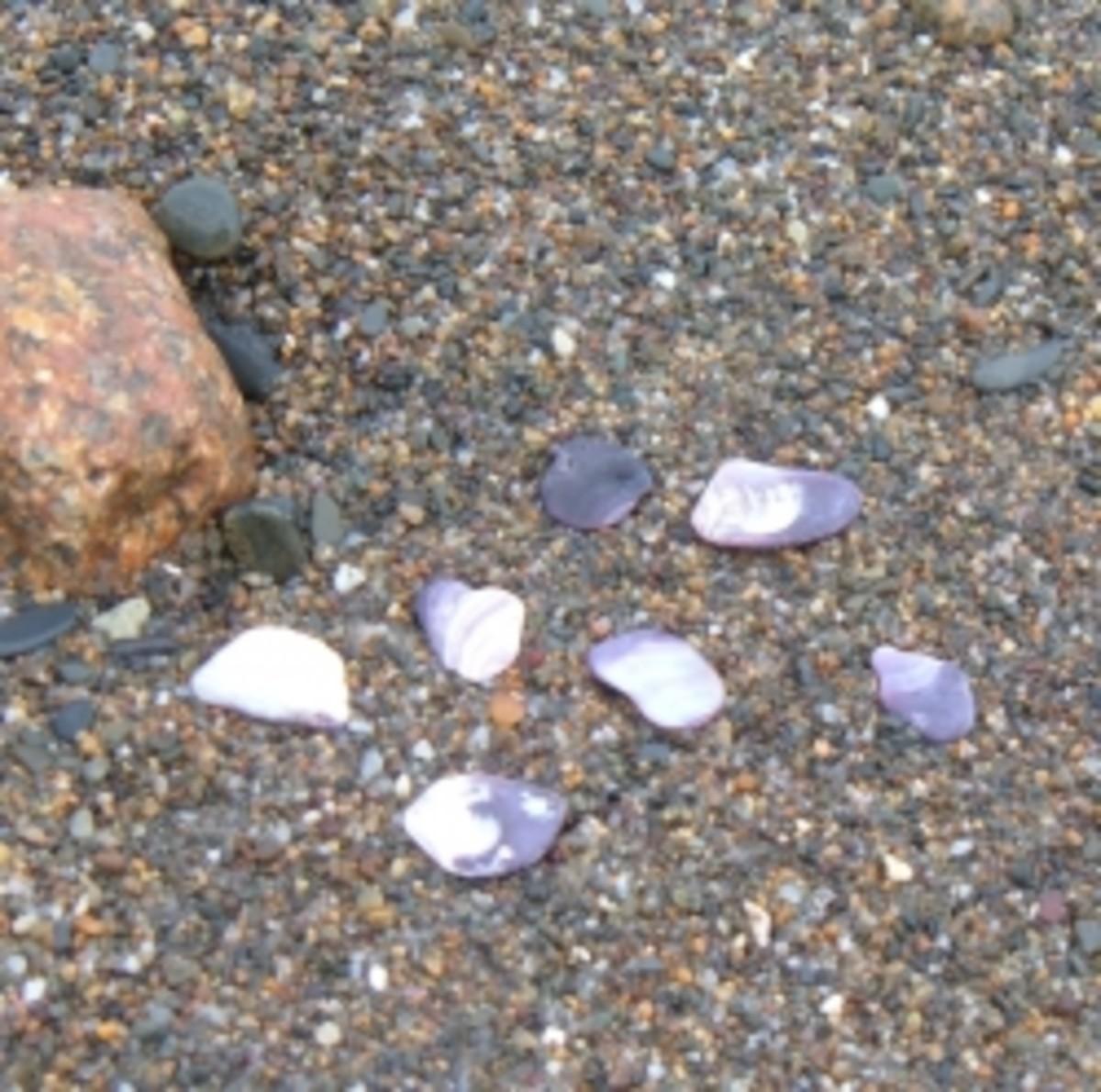 Wampum Shells on Humarock Beach