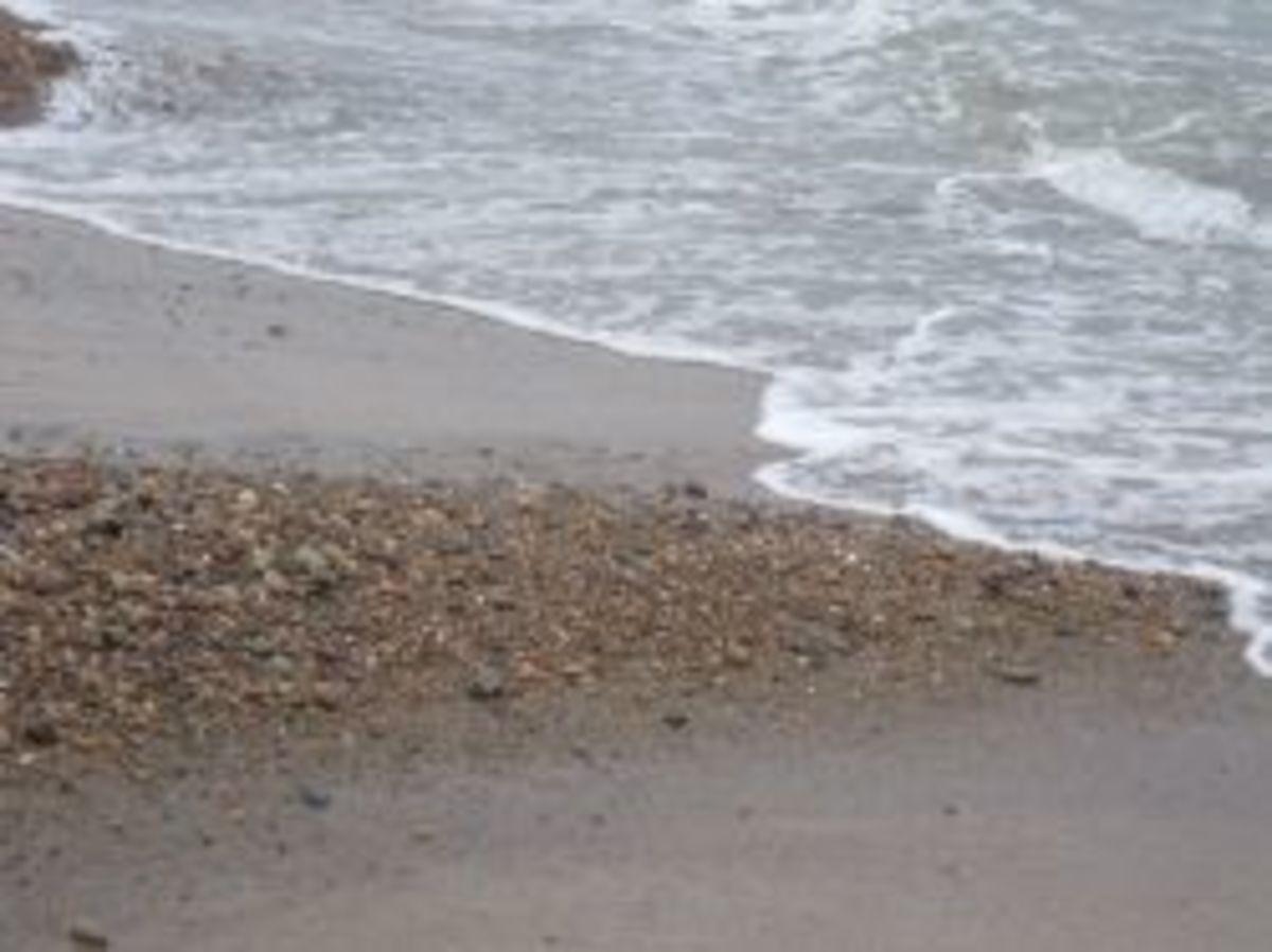 Looking for Wampum on Humarock Beach