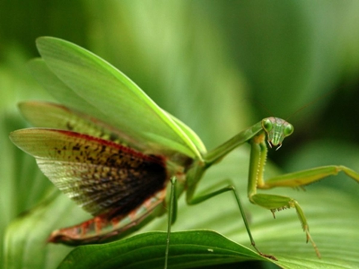 Green wings expanding ready to fly