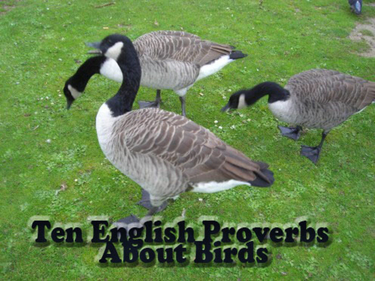 Ten English Proverbs And Sayings About Birds