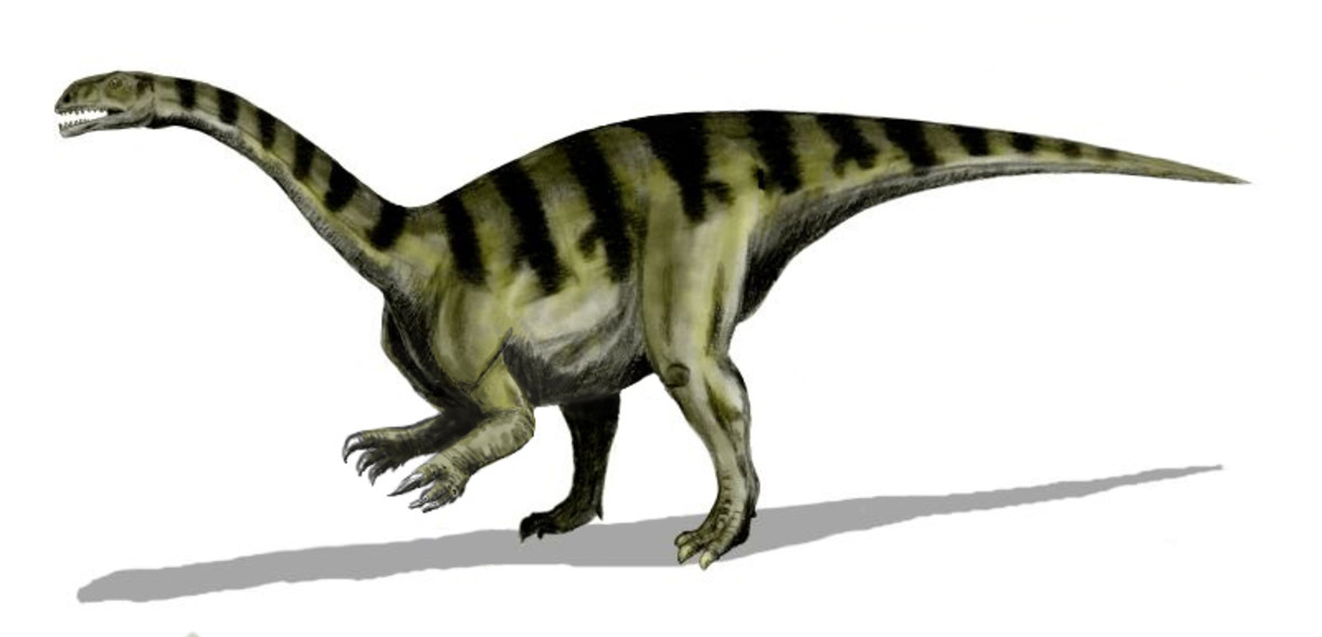 Plateosaurus was an early form of herbivorous dinosaur and a possible forerunner of the gigantic sauropods that dominated the Earth during the Jurassic.