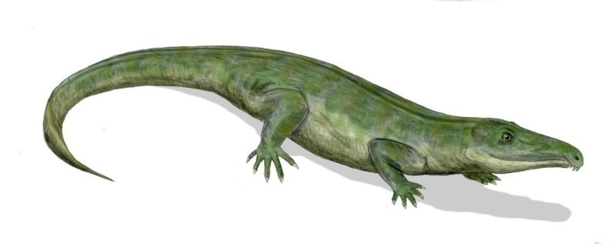 Proterosuchus also lived during the Early Triassic and was a possible ancestor of modern crocodiles.