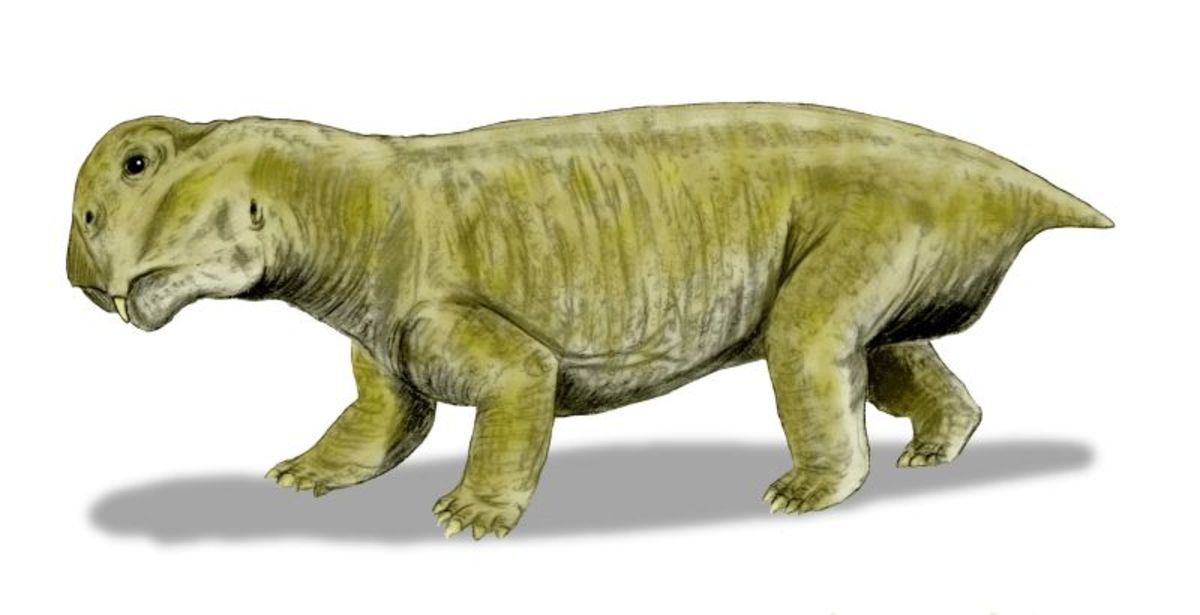 Lystrosaurus- a mammal like reptile that was the most common animal on the planet in the Early Triassic.