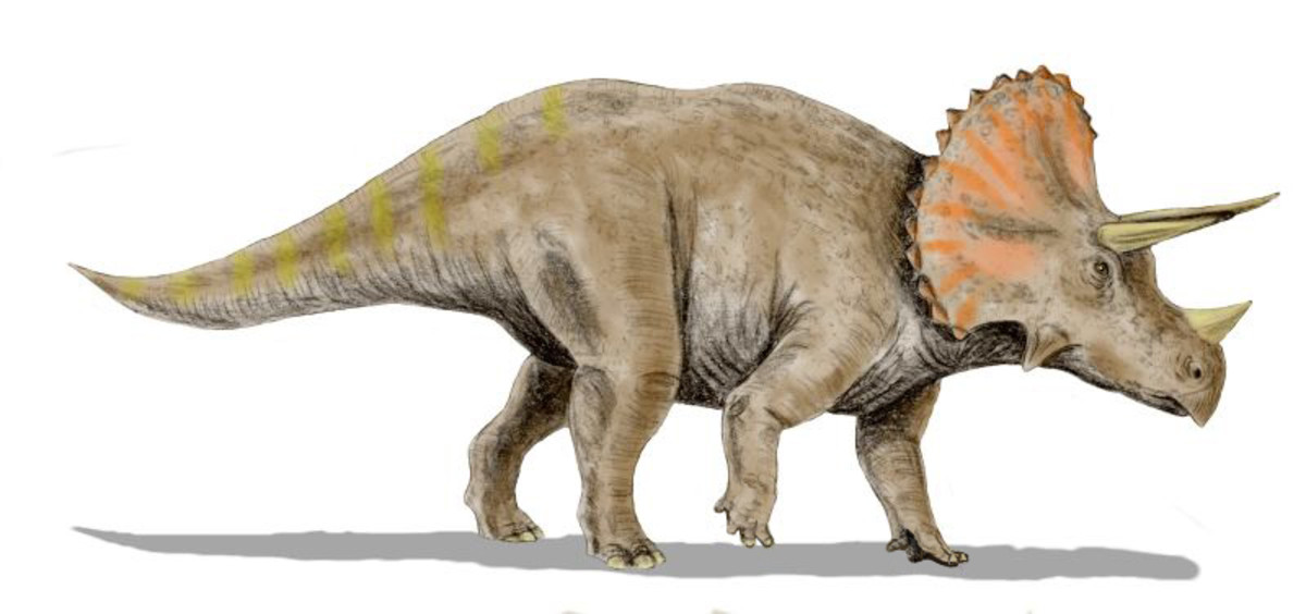 Another famous dinosaur, Triceratops that was very common in North America during the Late Cretaceous.