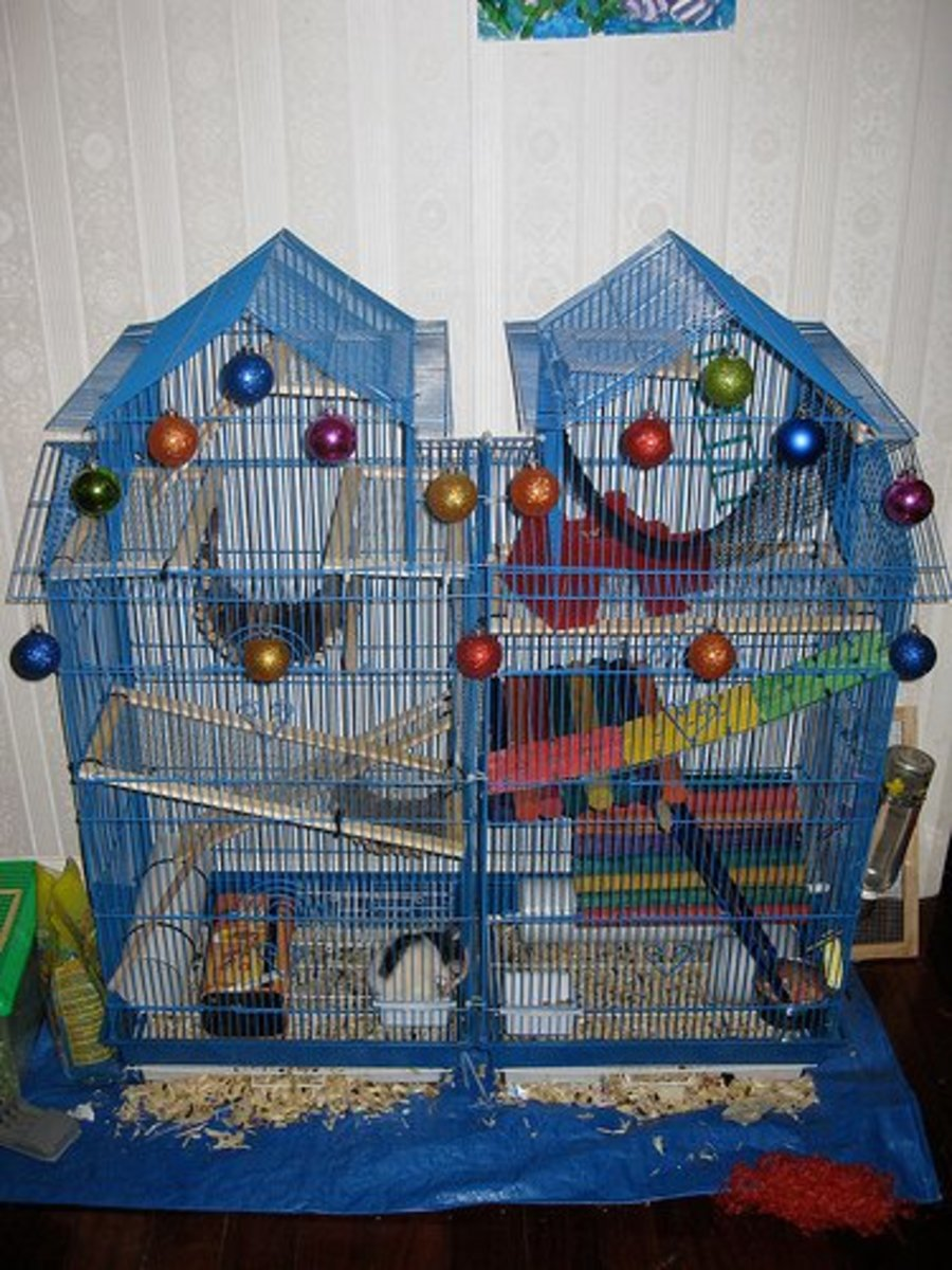 An ornate cage for multiple rats. Fantastic work, but not all rat keepers can afford this type of set up.
