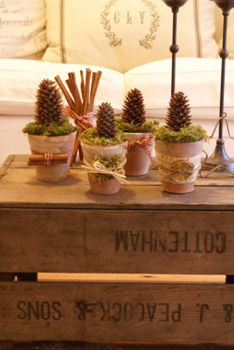 cute potted pine cones