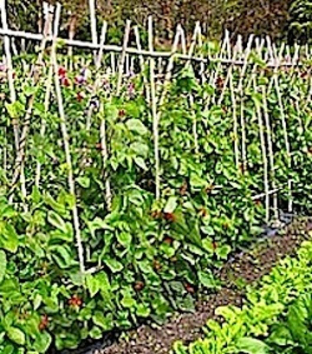 Companion Planted Vegetable Garden