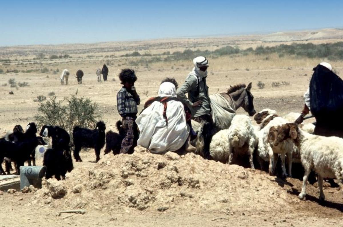 Shepherding was a common Old and New Testament Occupation and still is not uncommon in the Middle East today.