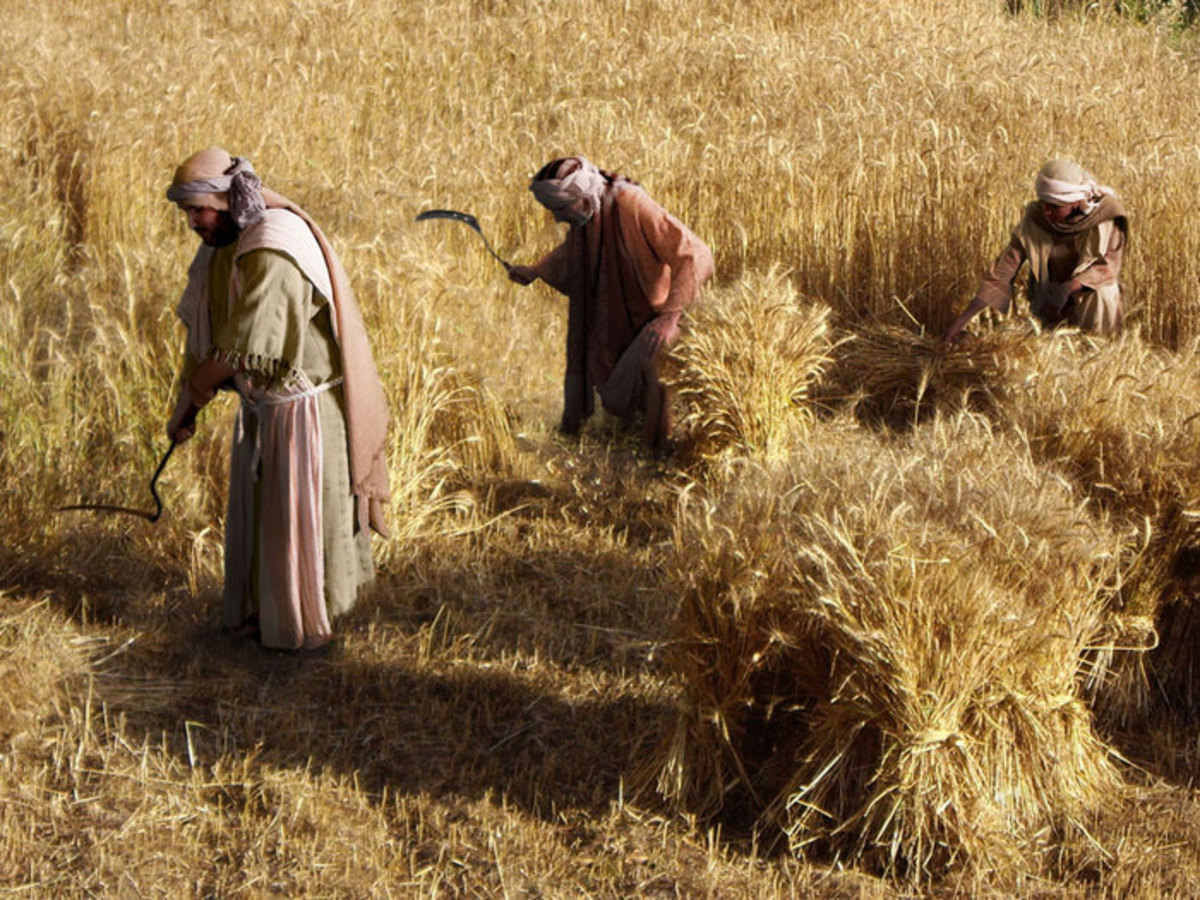 Many men worked as farmers. Here are men reapers of a wheat harvest.