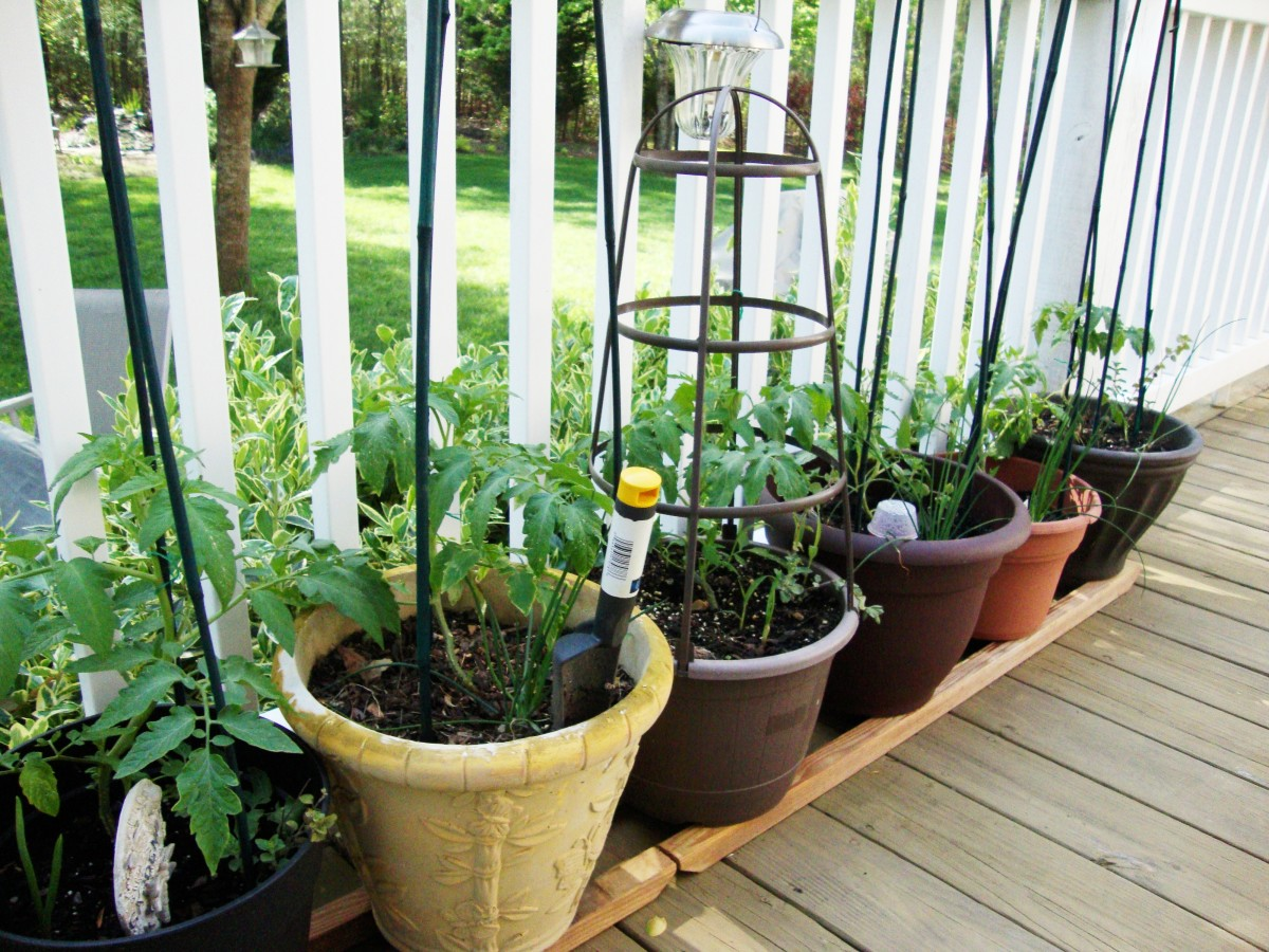 tips-for-growing-tomatoes-in-containers