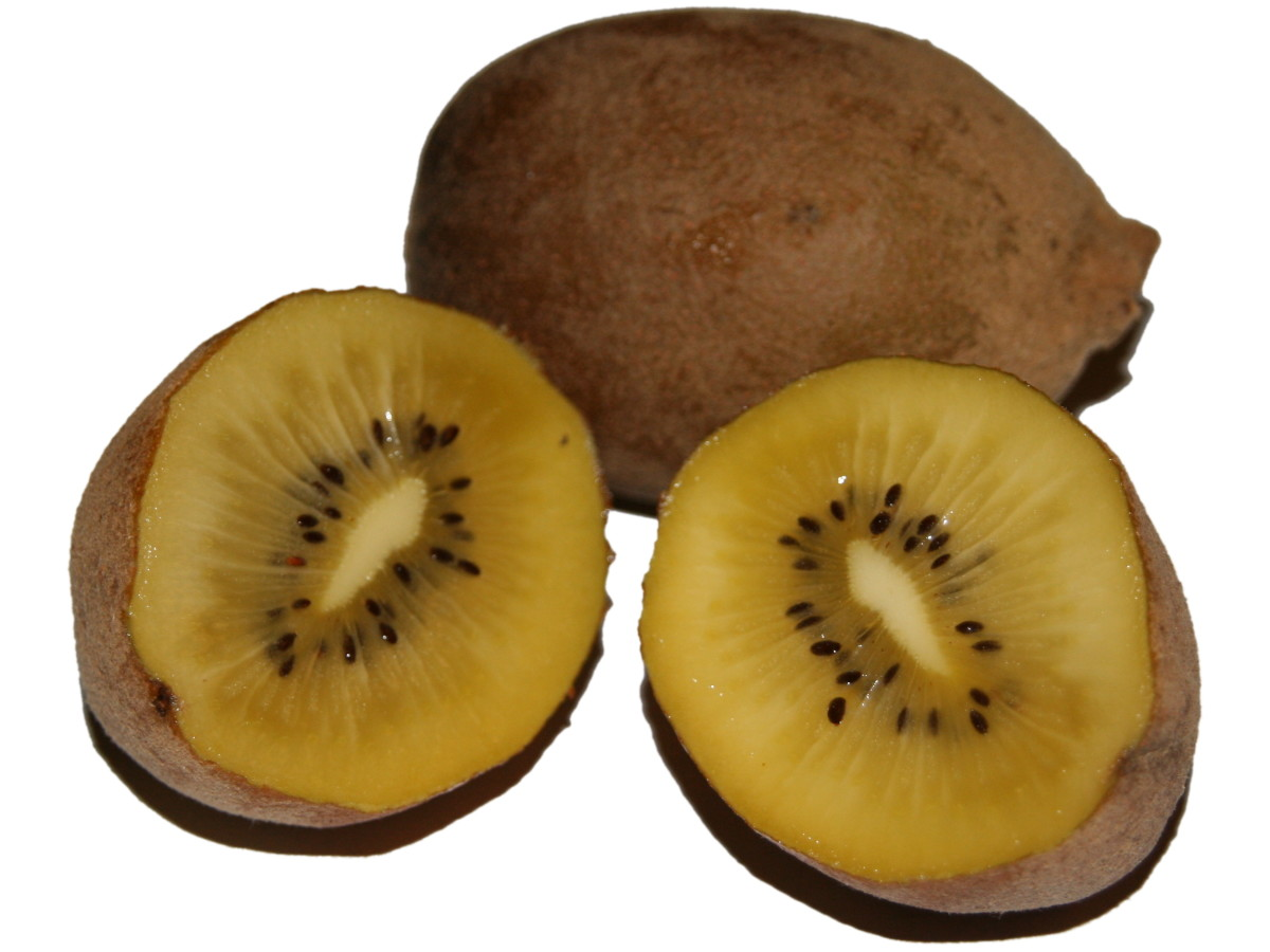 Smooth skinned golden kiwifruit (A. deliciosa)