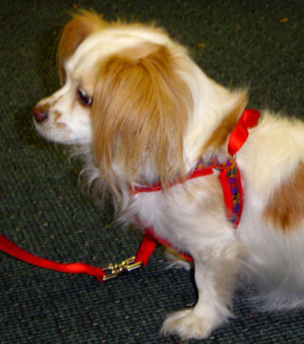 Easy-to-use dog harnesses for arthritis sufferers