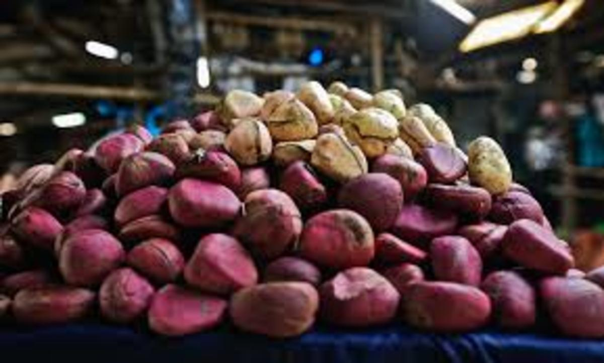 Kola nuts play an integral part in ibo traditional weddings