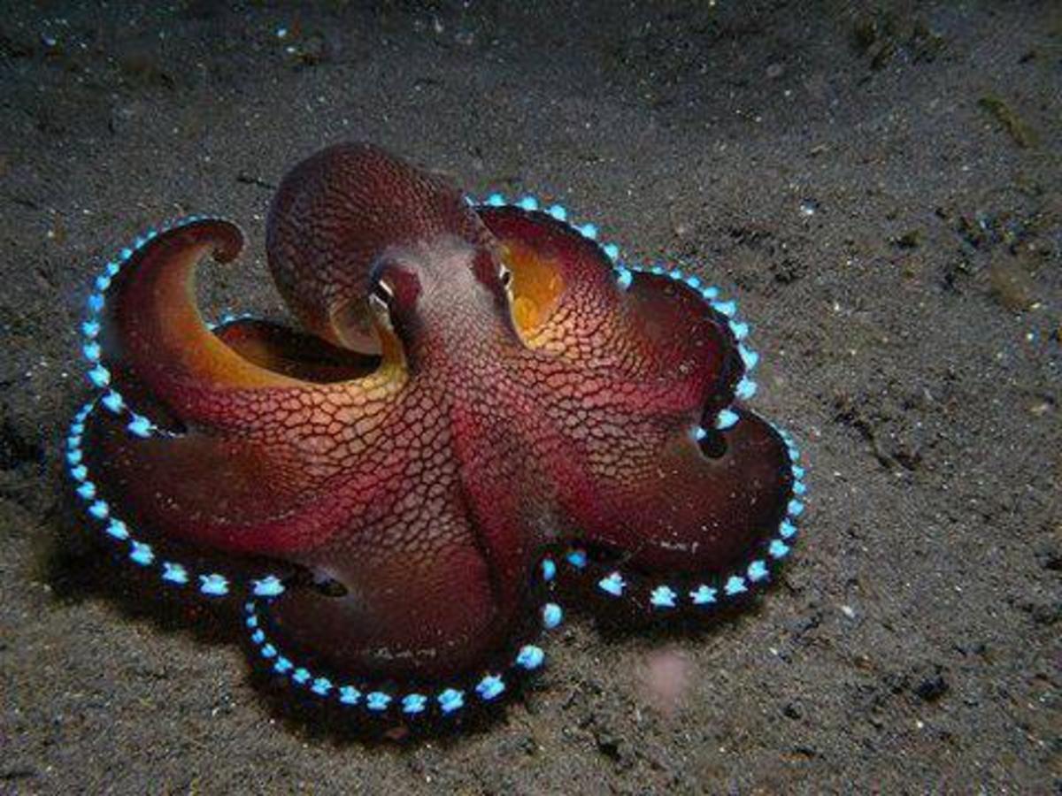 the-coolest-underwater-animals