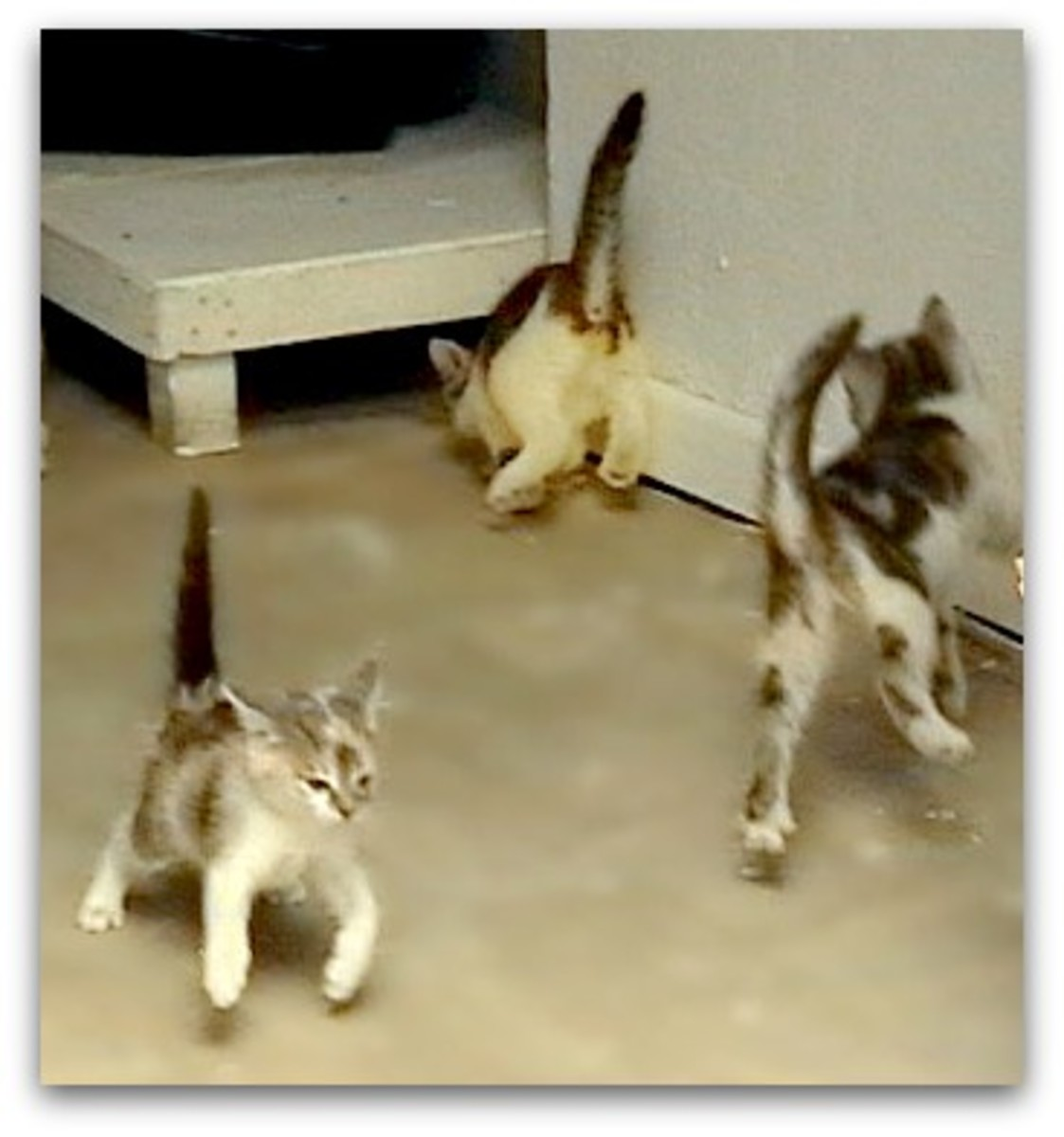 Bouncing cats celebrating their good health