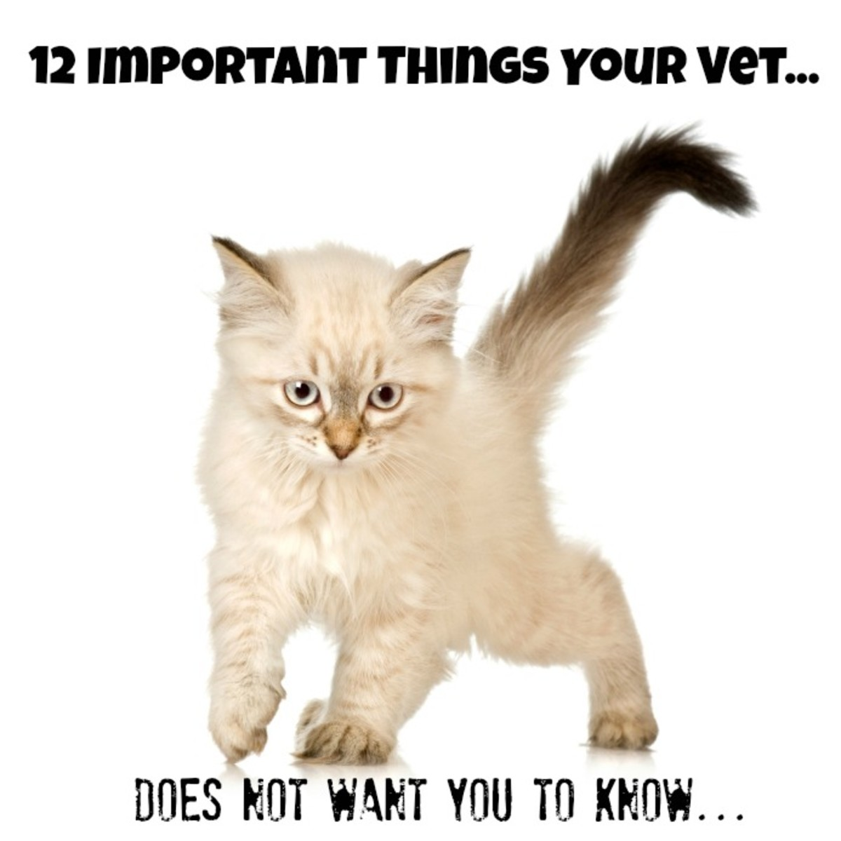 12 Things Your Vet Does Not Want You To Know!