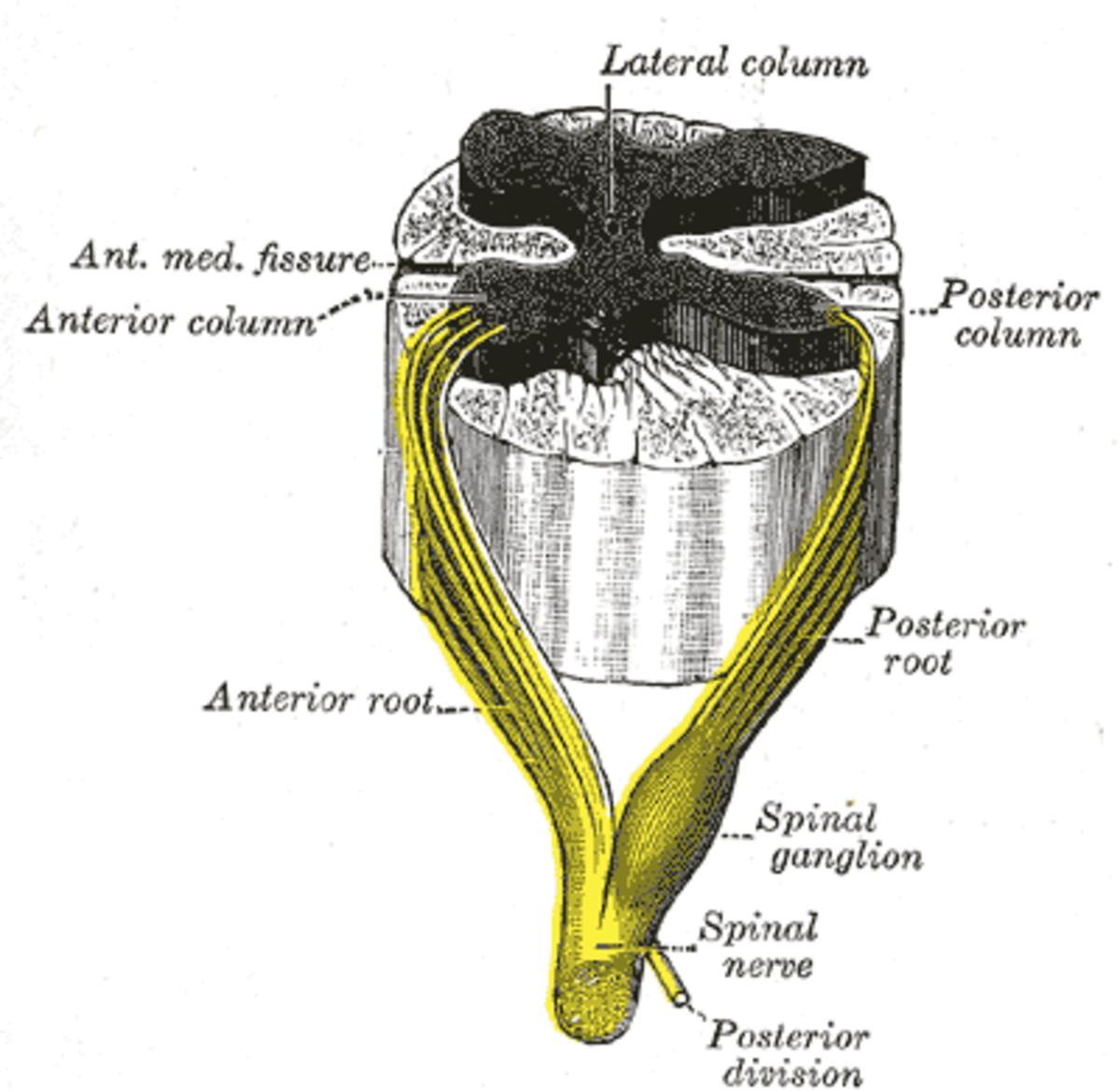 human-anatomy-lesson-5