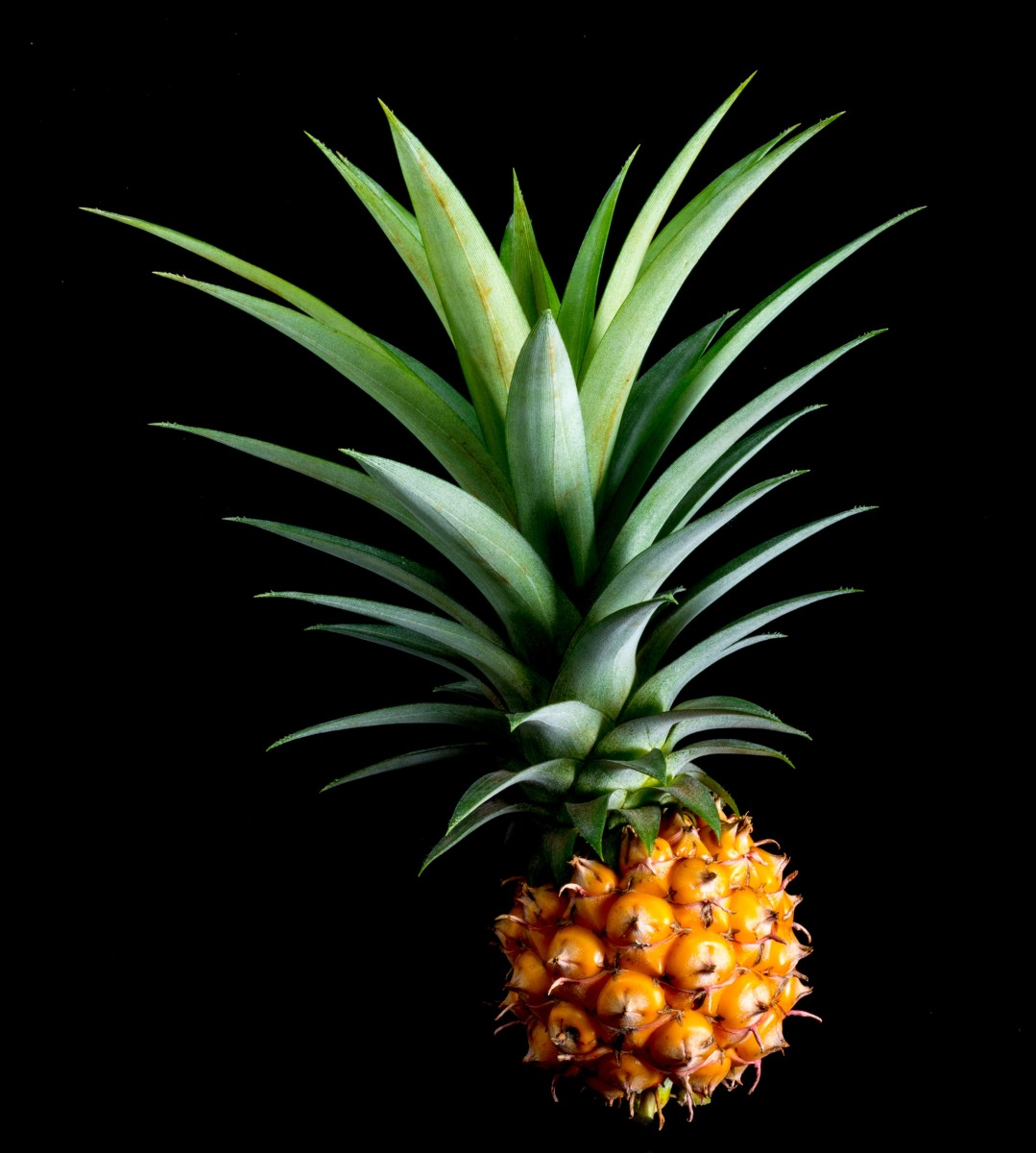 Ripe Sweet Pineapple Photo