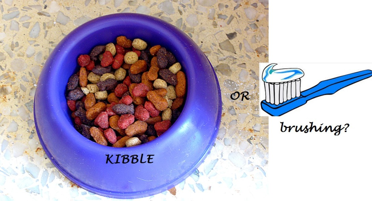 does kibble clean dog teeth?