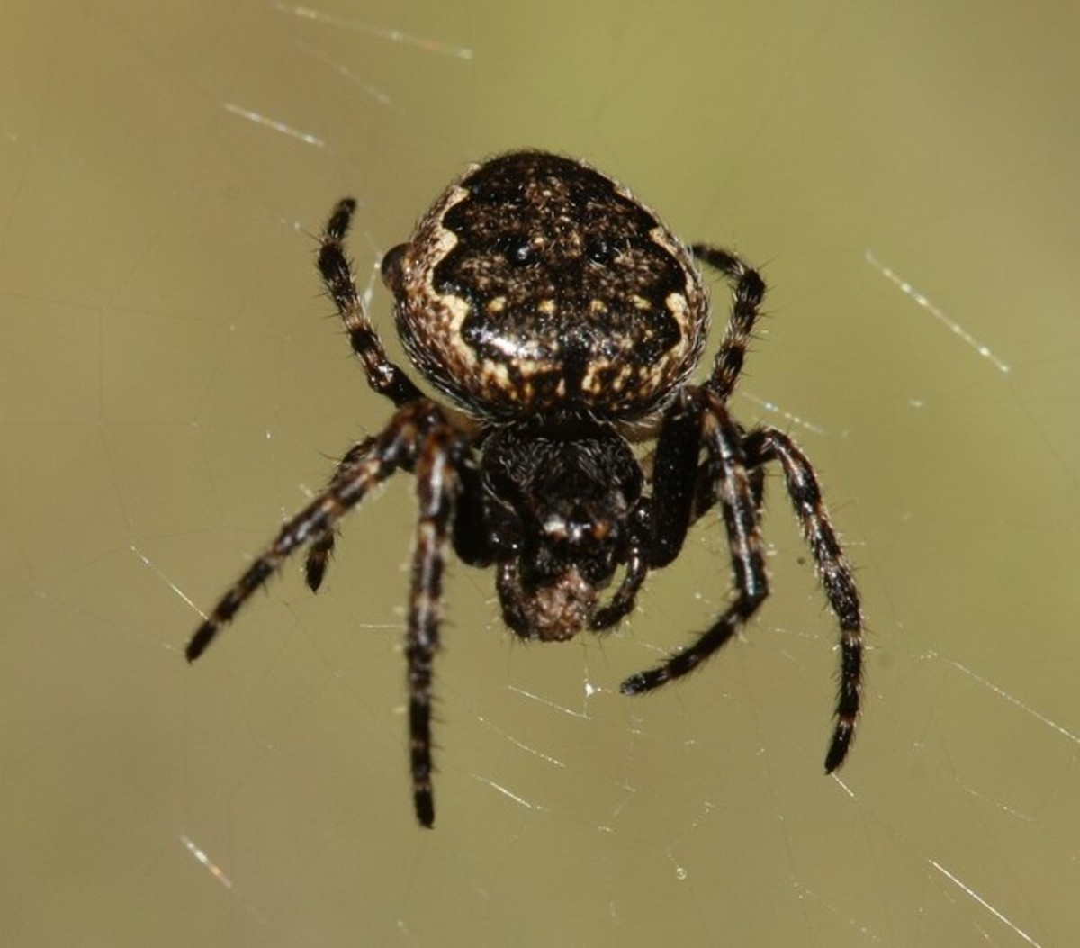 These eight-legged creatures get a bad rap.