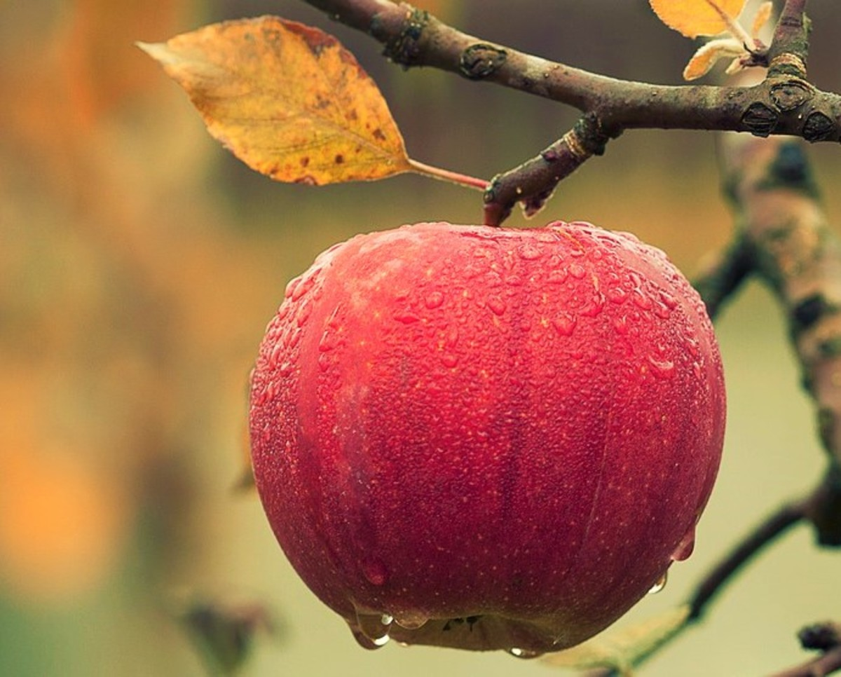 The Art of Eating An Apple (Romantic Poem)