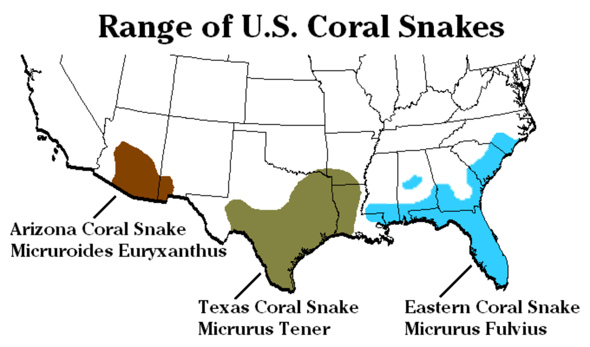 Three species of coral snake are found in the United States.