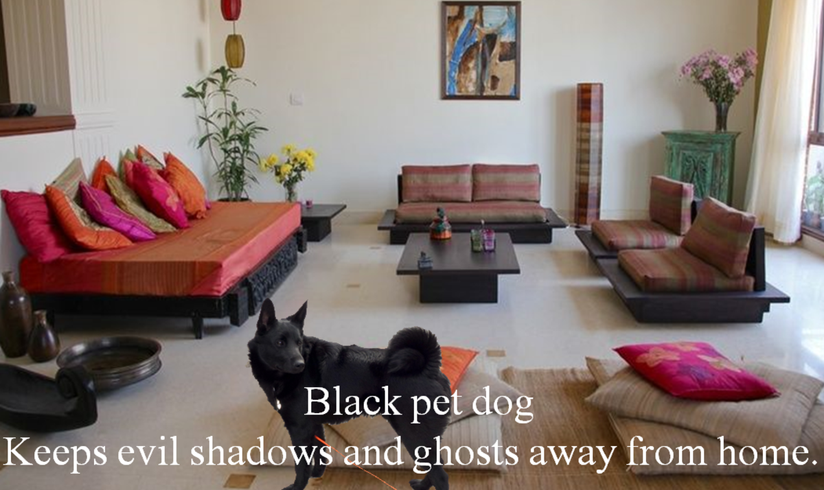10-superstitions-about-black-dog