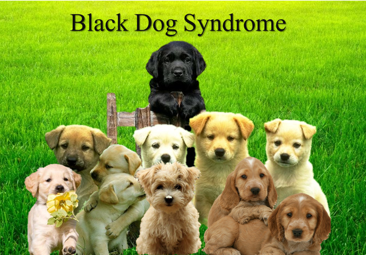 10 Superstitions About Black Dogs