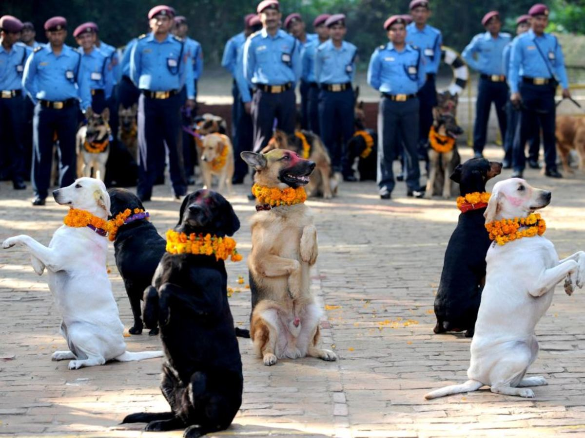 NEPAL POLICE PARTICIPATING TO KUKUR TIHAR, FESTIVAL CELEBRATION