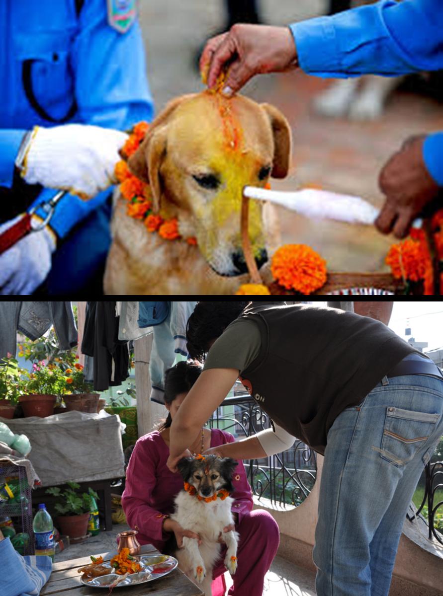 dog-worship-in-nepal