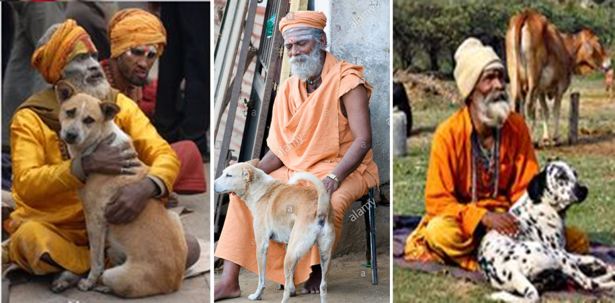 Hindu Sadhus With their  Dogs