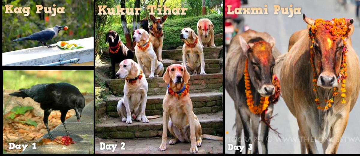 First 3 days of Tihar festival