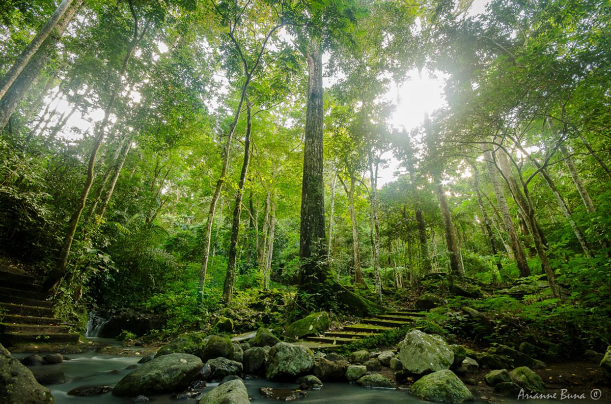 The majestic Makiling Botanical Gardens