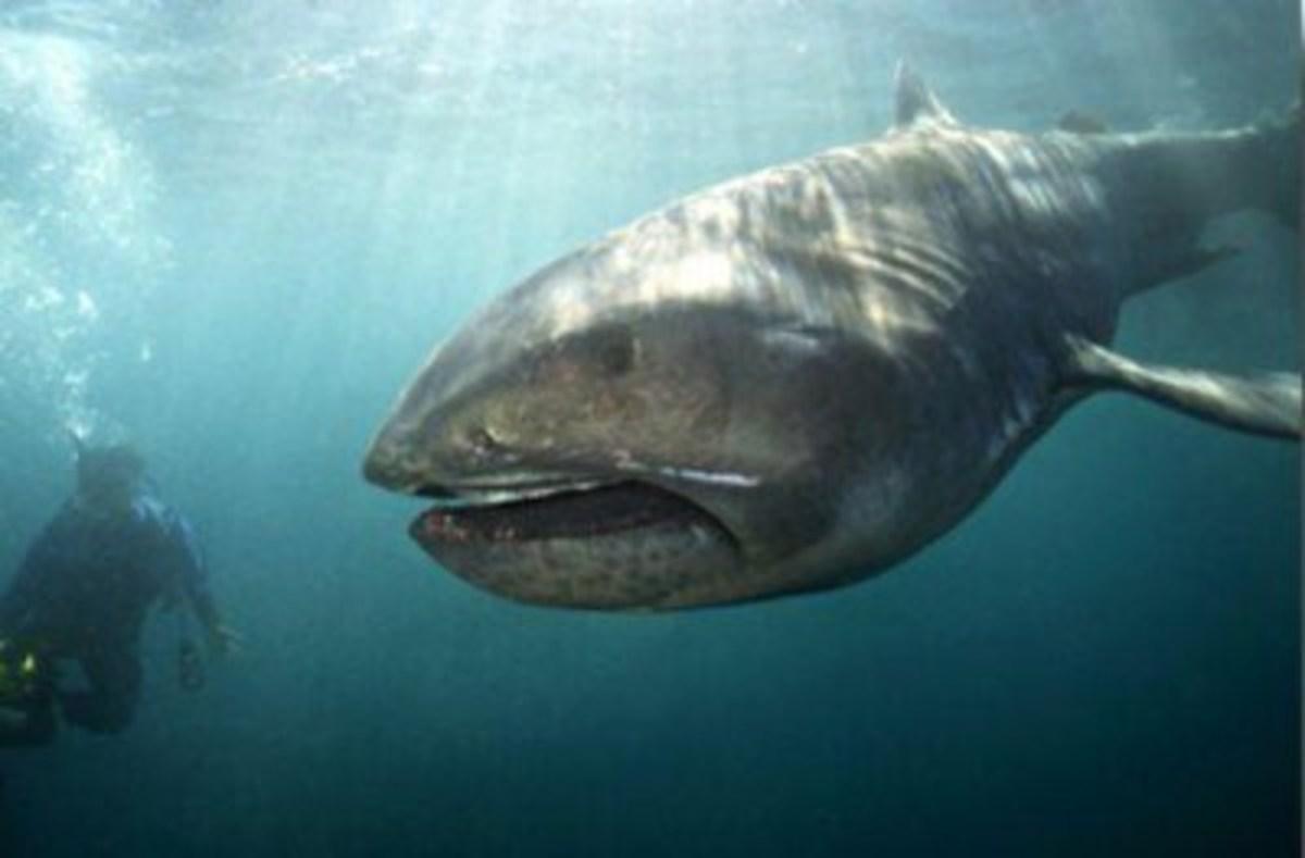 alien-sharks-the-top-12-weirdest-looking-sharks-we-have-seen