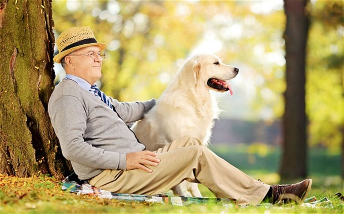 10 Best Dogs for Single Living Men