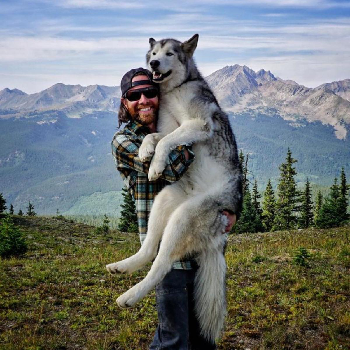 Best Dogs For Single Living Men