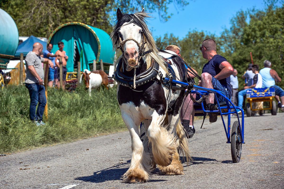 Appleby horse fair vardo's and vanners