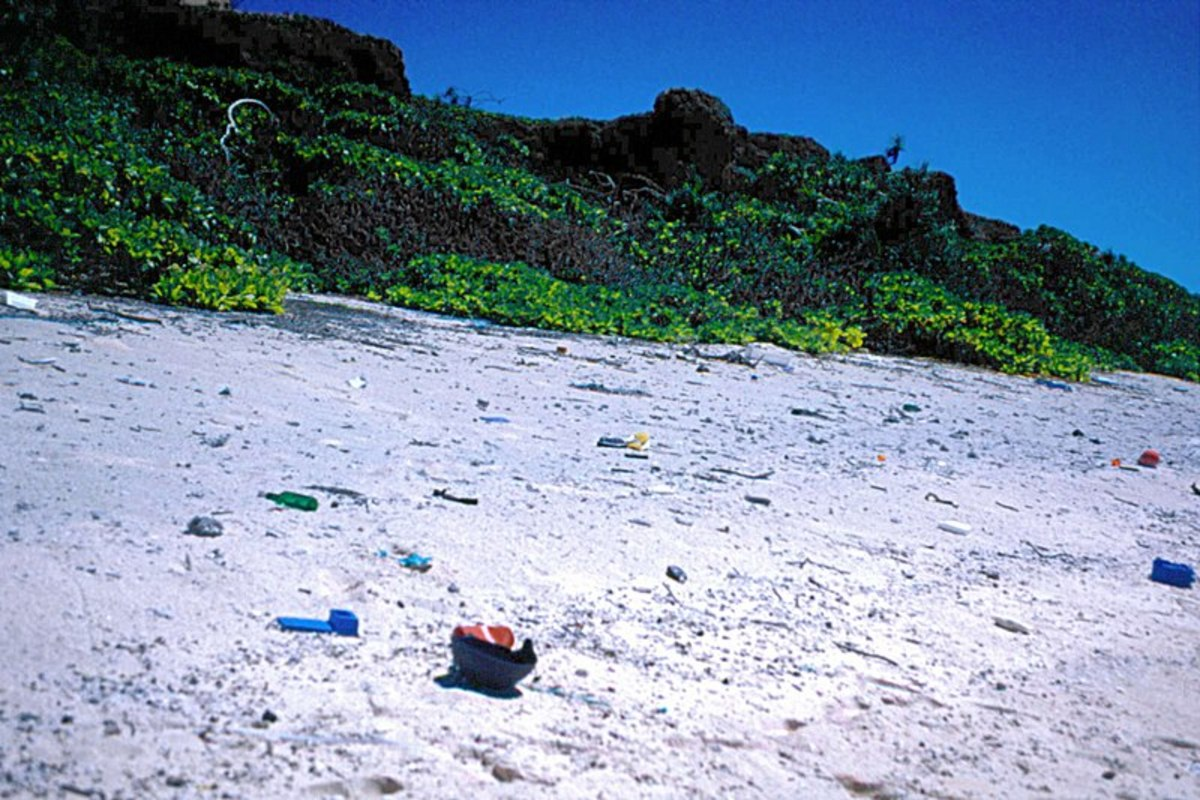 A typical site around the world today. A beach strewn with plastic. This photo was taken on Henderson Island.