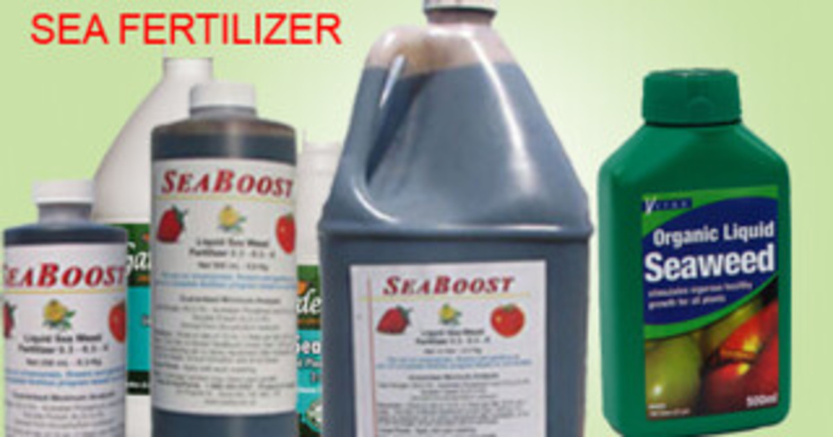 Some forms of bottled liquid seaweed extract.